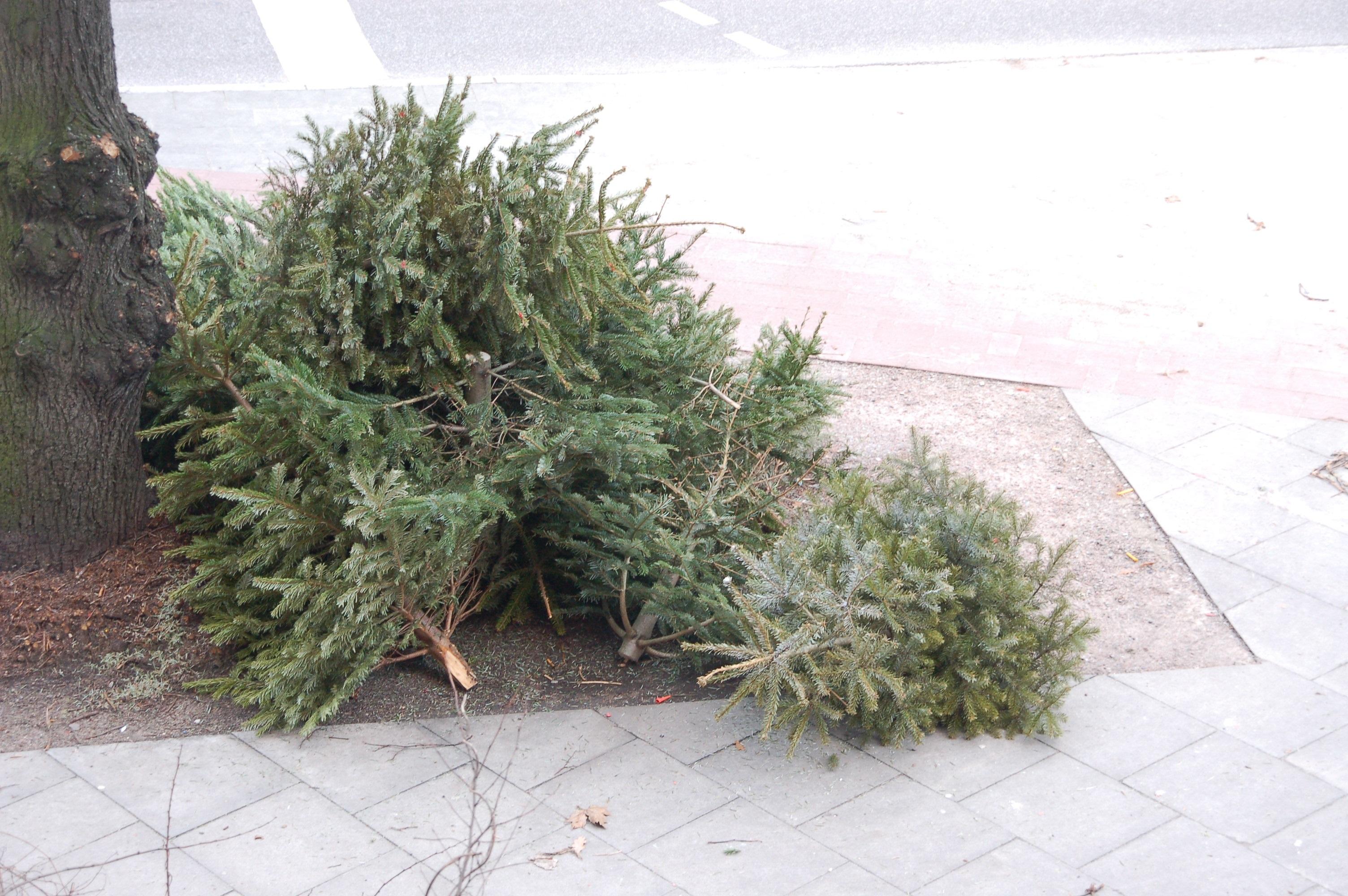 Tote Weihnachtsbäume