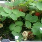 10 Bewässerungsmethoden für Balkonpflanzen bei Abwesenheit