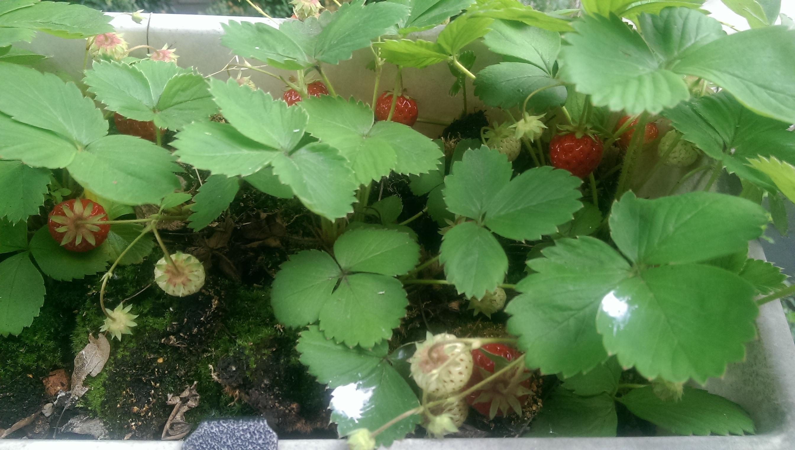 Obst und Gemüse vom Stadtbalkon