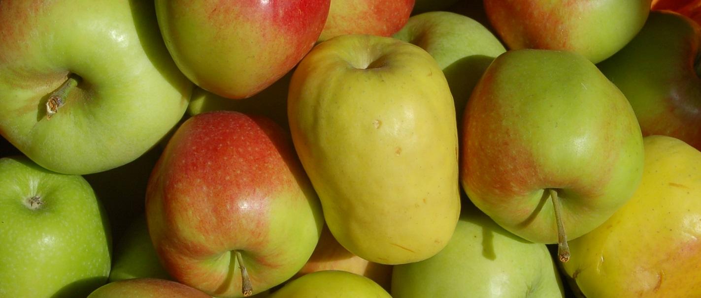 regionale und importierte Äpfel, Hasenkopf