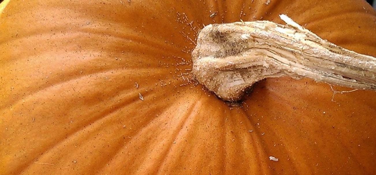 Kürbisstrunk Detail Halloween