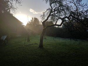 Bio-Bauernhof Hockmannshof Humptrup - erster Sonnenstrahl durchbricht Nebel