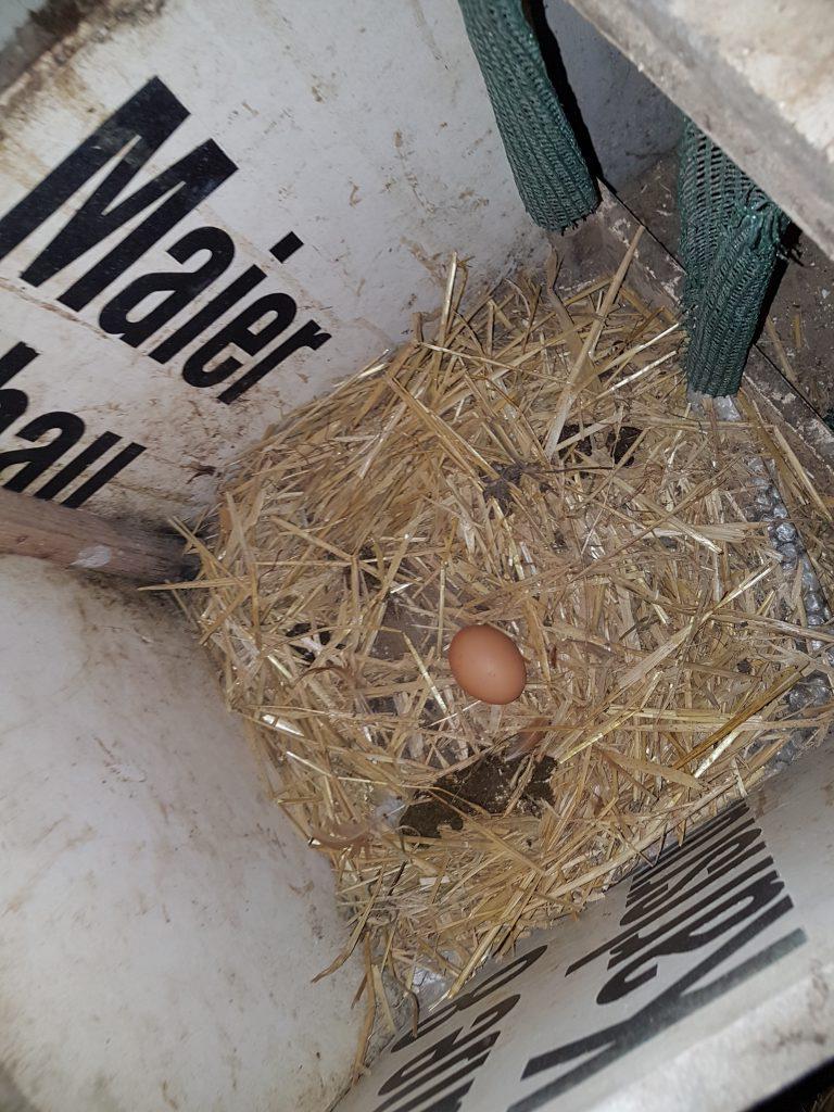 Bio-Bauernhof Hockmannshof - frisch gelegtes Ei