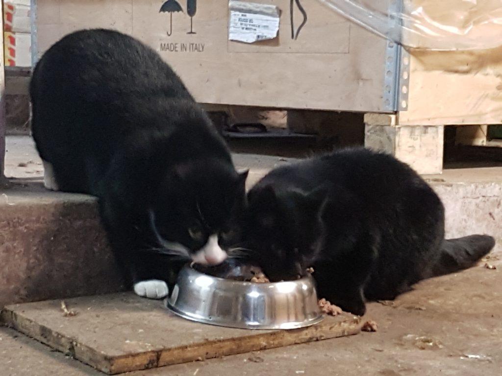 Bio-Bauernhof Hockmannshof - die Hofkatzen Mona und Mimi