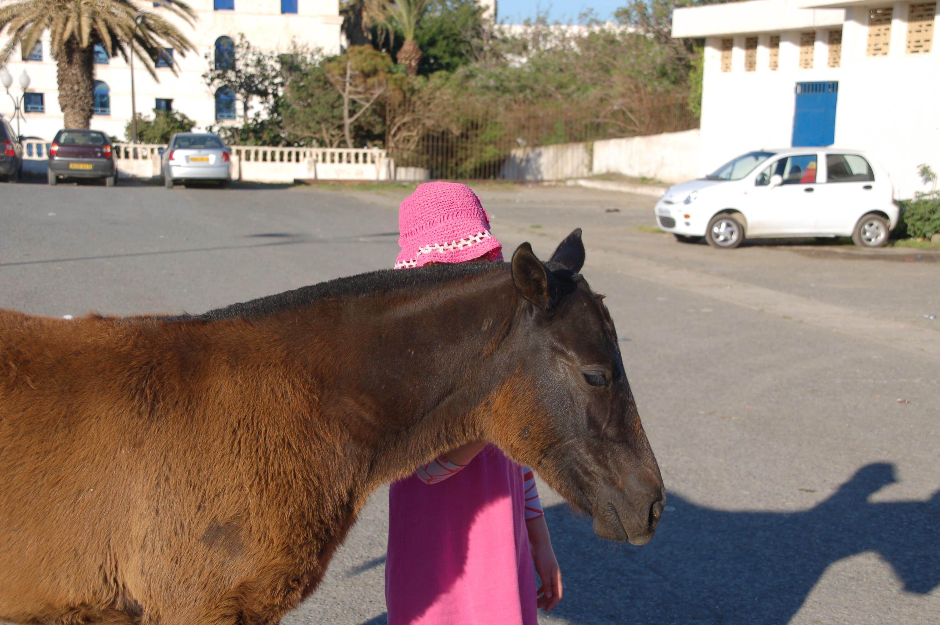 Ich wünsche mir ein Pferd, Mama!