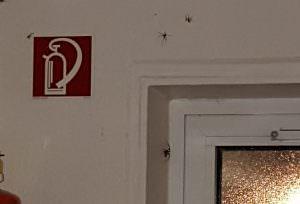 Spinnen_Ungeziefer_ökologisch_loswerden